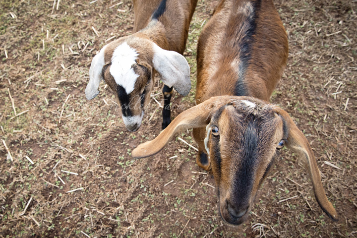 Sonia and Ruth - The Freckled Farm Soap Company Goat Milk Soap