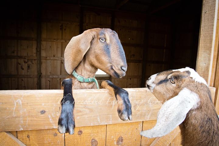 Tina and Ruth - The Freckled Farm Soap Company Goat Milk Soap