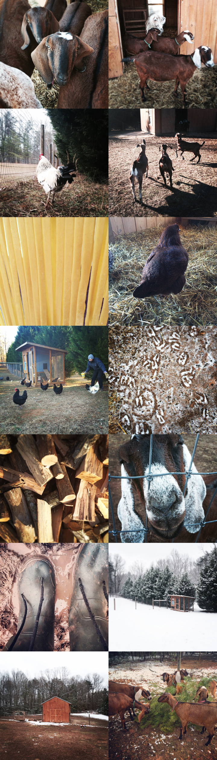 Photos from The Freckled Farm