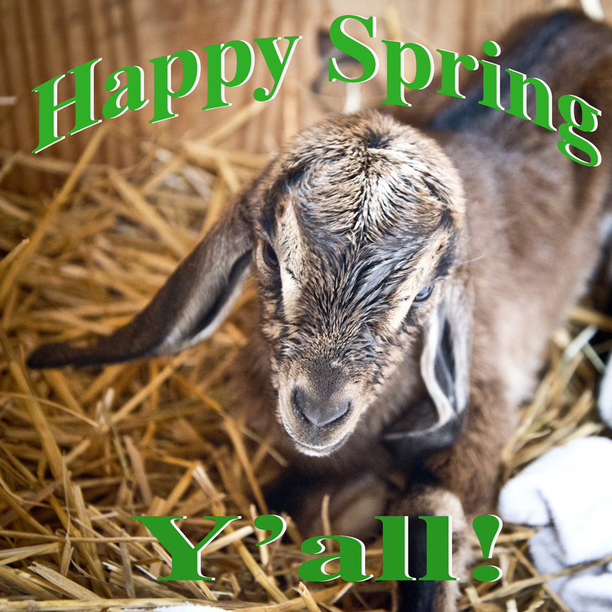 Happy Spring from The Freckled Farm Soap Company