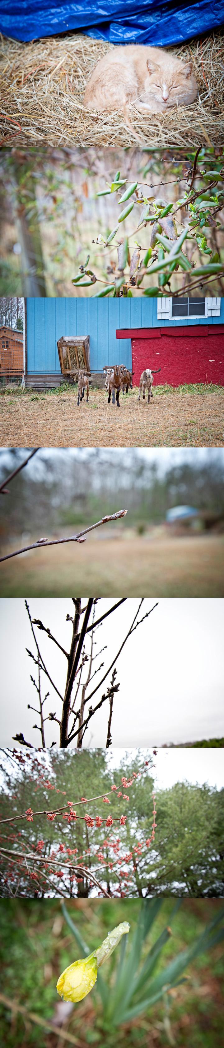 Budding Spring around The Freckled Farm