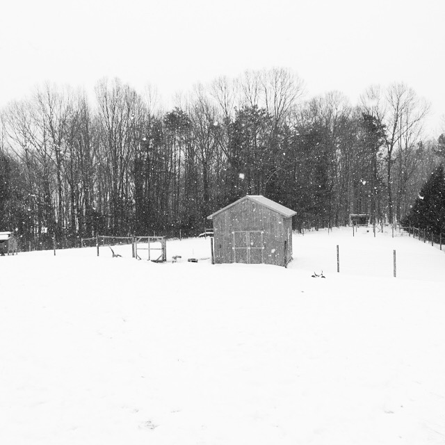 The Freckled Farm Winter