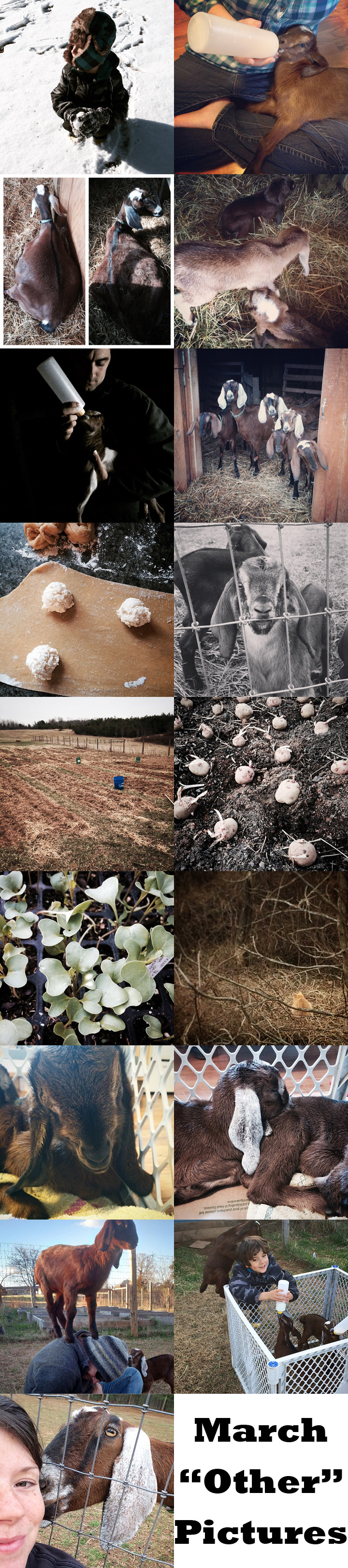 March other pictures - The Freckled Farm