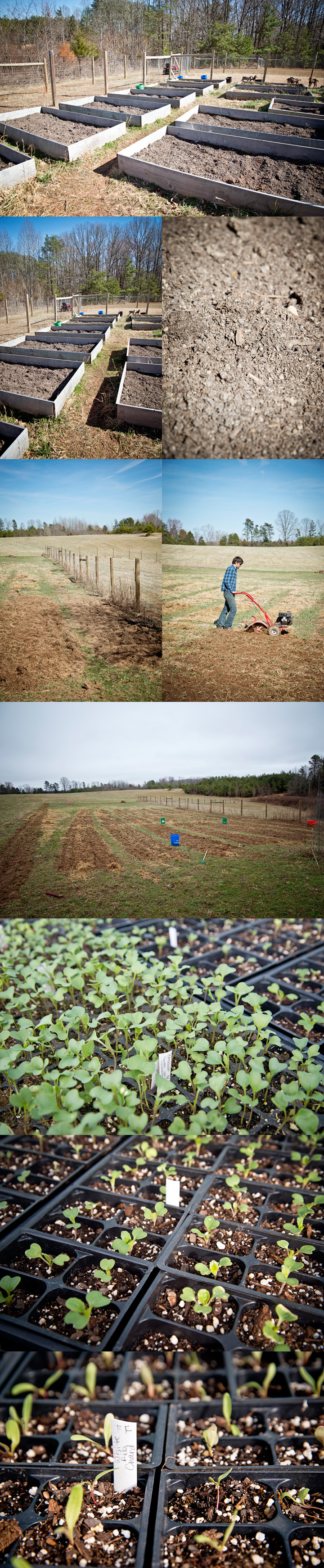 Phase 2 - The Freckled Farm