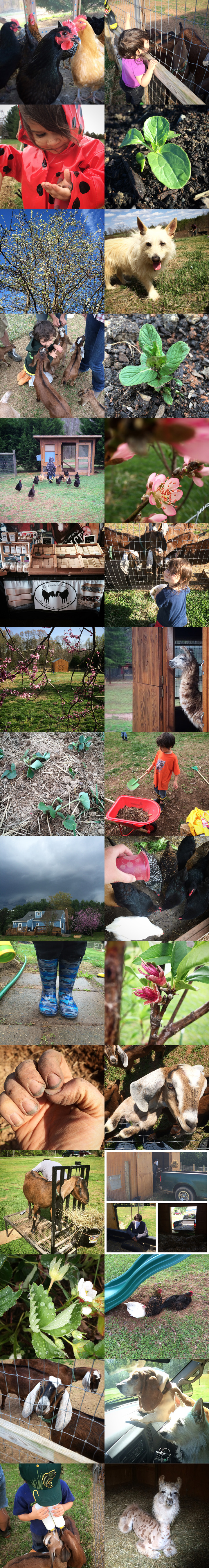365 Project - April - A photo a day from The Freckled Farm